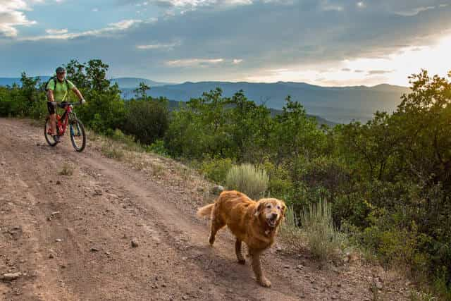How To Take Your Dog On A Bike Ride ( 6 Easy Methods )